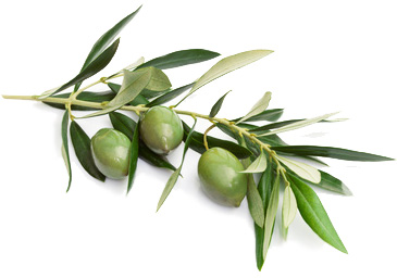 Olives Southern Italy tour experience